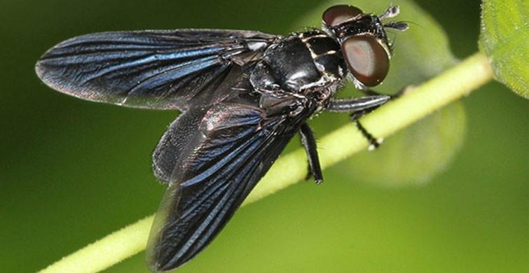 Kuraklık Sivrisinek Sürülerini Hortlatacak