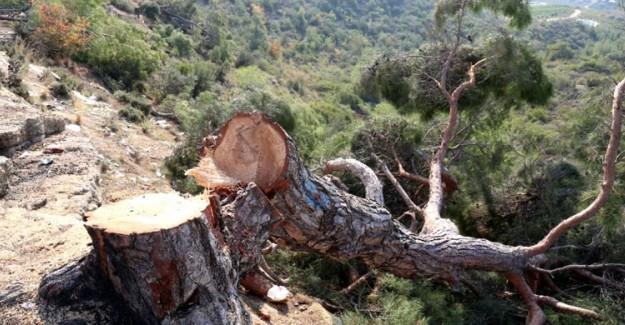 Mersin'de Bin 511 Ağacı İzinsizce Kesen Kişi Tutuklandı