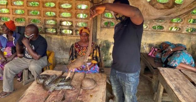 Nijerya'daki Canlı Hayvan Pazarı Pes Dedirtti