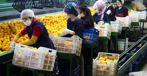 Pandemide Yaş Meyve-Sebze İhracatı Yüzde 36 Yükseldi