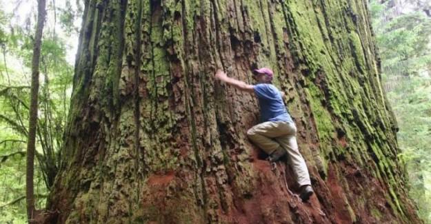 Rüyada Ağaca Tırmanmak Ne Anlama Gelir?