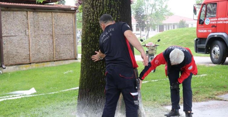 Sakarya'da Meydana Gelen Ağaç Yangını Yayılmadan Söndürüldü
