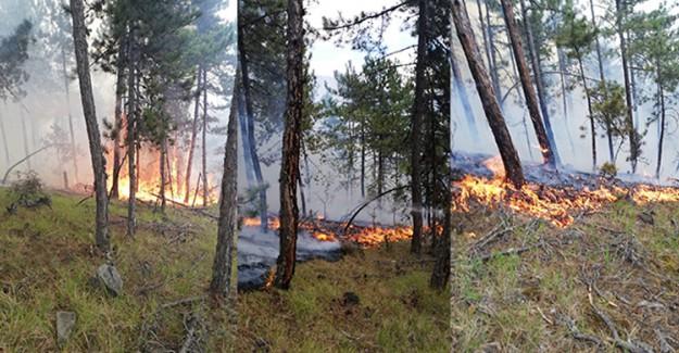 Sinop'ta Orman Yangını!