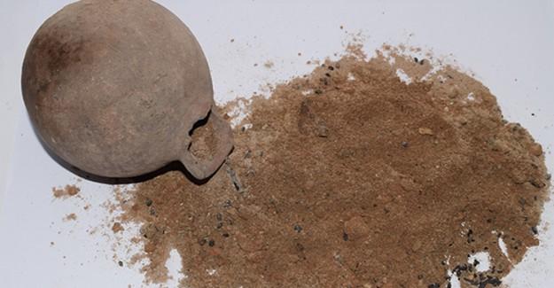 Tarihi Kazılarda En Eski Tahıl Taneleri Bulundu