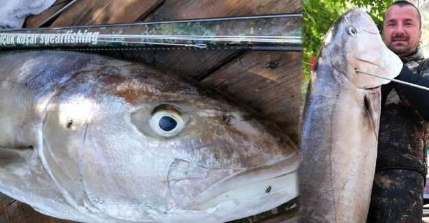 Tatile Gitti, İnsan Boyu Kadar Balık Avladı