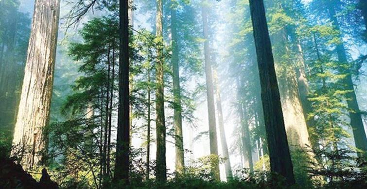 Tropikal Yağmur Ormanlarının Büyük Kısmına Zarar Verildi