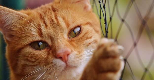 Uyuşturucu Kuryeliği Yapan Kedi Sri Lanka'daki Hapishaneden Kaçtı