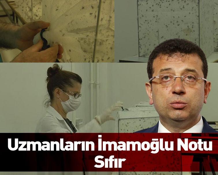 Sivrisinek Tartışması İBB ve Uzmanlar Arasında Tartışma Yarattı