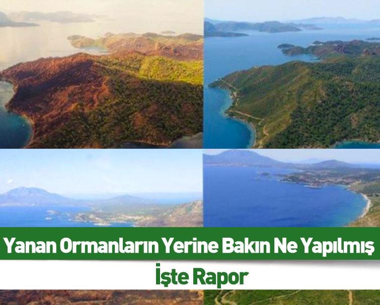 'Yanan Ormanların Yerine Otel Yapılıyor' Yalanı Patladı! 5 Milyondan Fazla Ağaç Dikildi