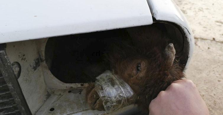 Akçakale'de, Arabanın Farında Sakladıkları Kuzuları Gümrükten Geçirmeye Kalkıştılar