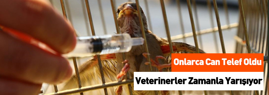 Gönüllü Veterinerler Yangından Etkilenen Hayvanlar İçin Seferber Oldu